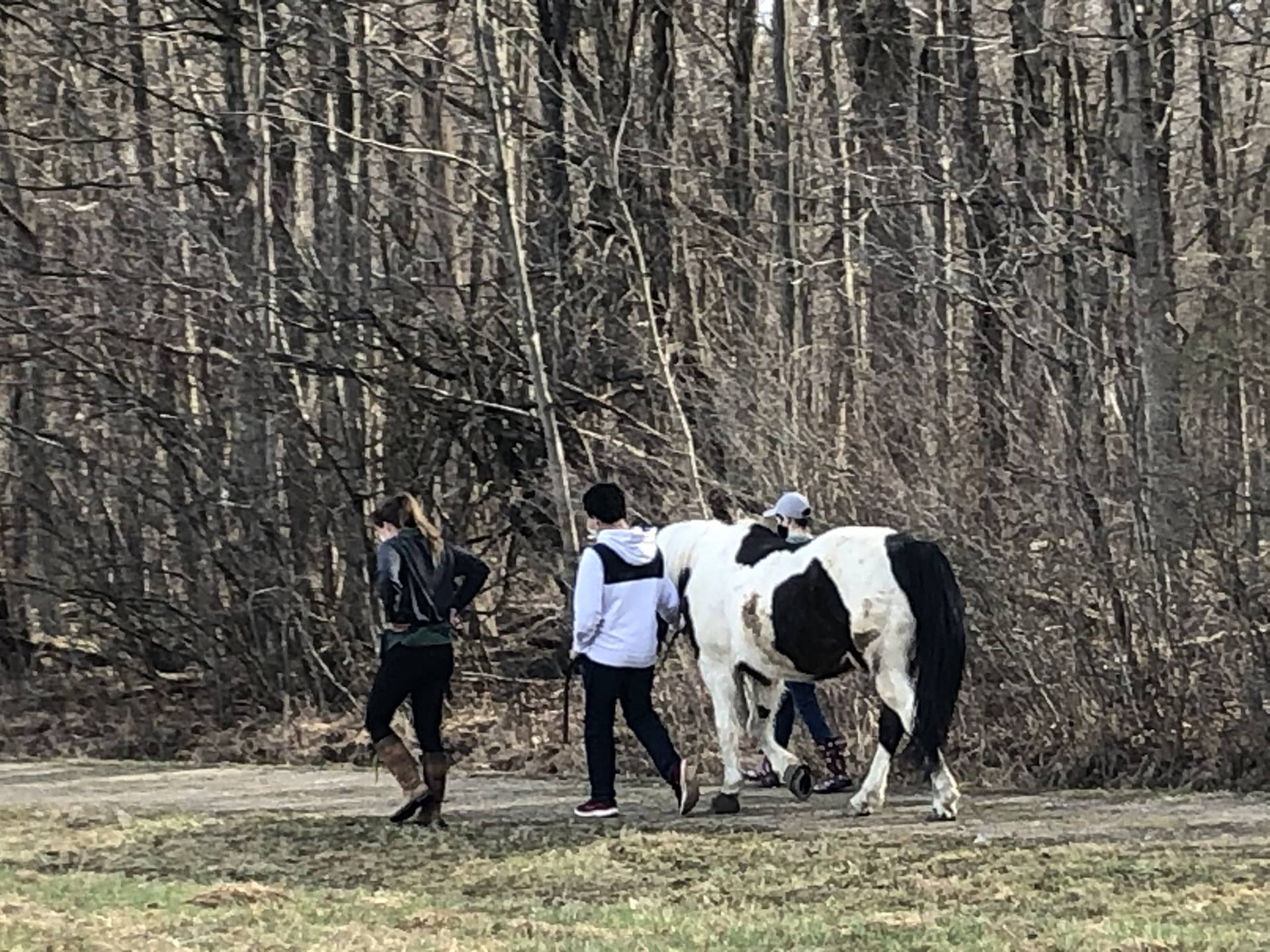 Equine Partnerships class trail walk