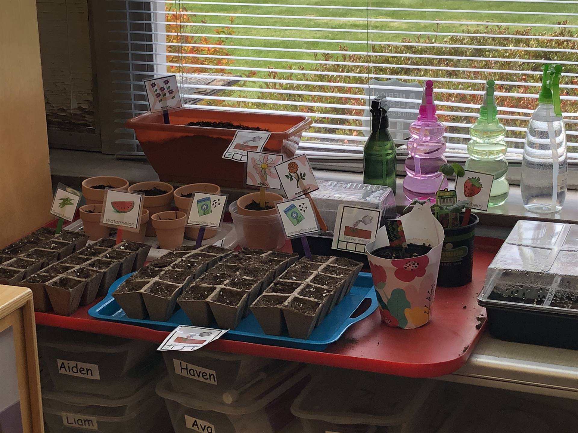 Students in Mrs. Robinson's full day classroom learning about plants and what they need to grow!