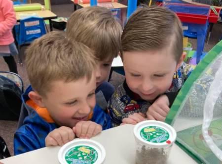 Perry preschoolers looking at caterpillar chrysalises!
