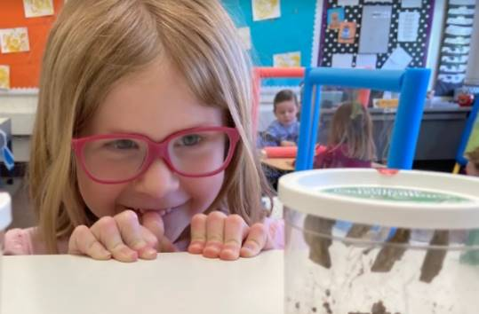 Perry preschool student looking at caterpillar chrysalises!
